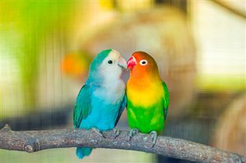 Животные, птицы, рыбы